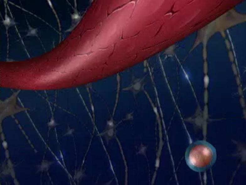מבוא לנוירו-אימונולוגיה וטרשת נפוצה