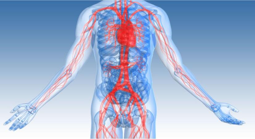 כירורגית כלי דם